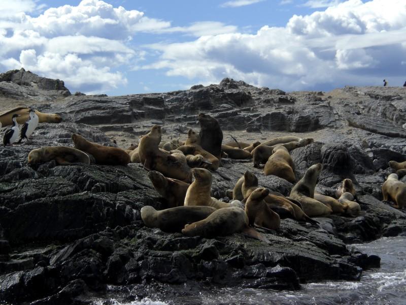 Seelöwen auf der Insel Los Lobos
