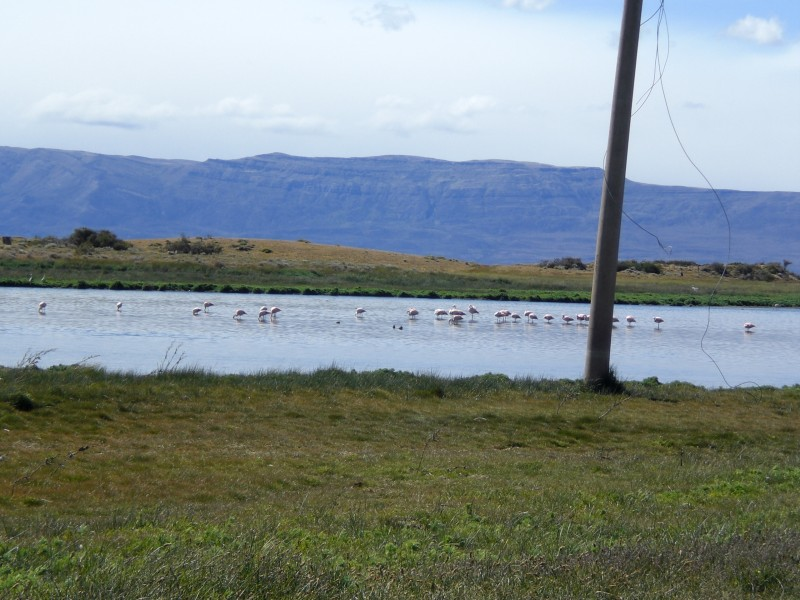 Flamingos am Dorfrand
