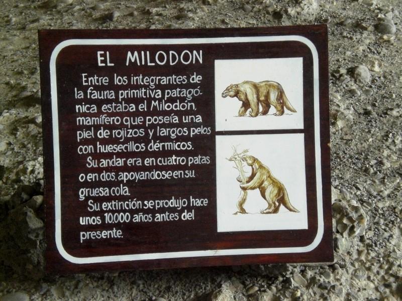 El Milodon, das Riesenfaultier