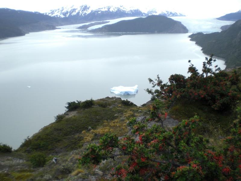Lago Grey und im Hintergrund der Grey Gletscher